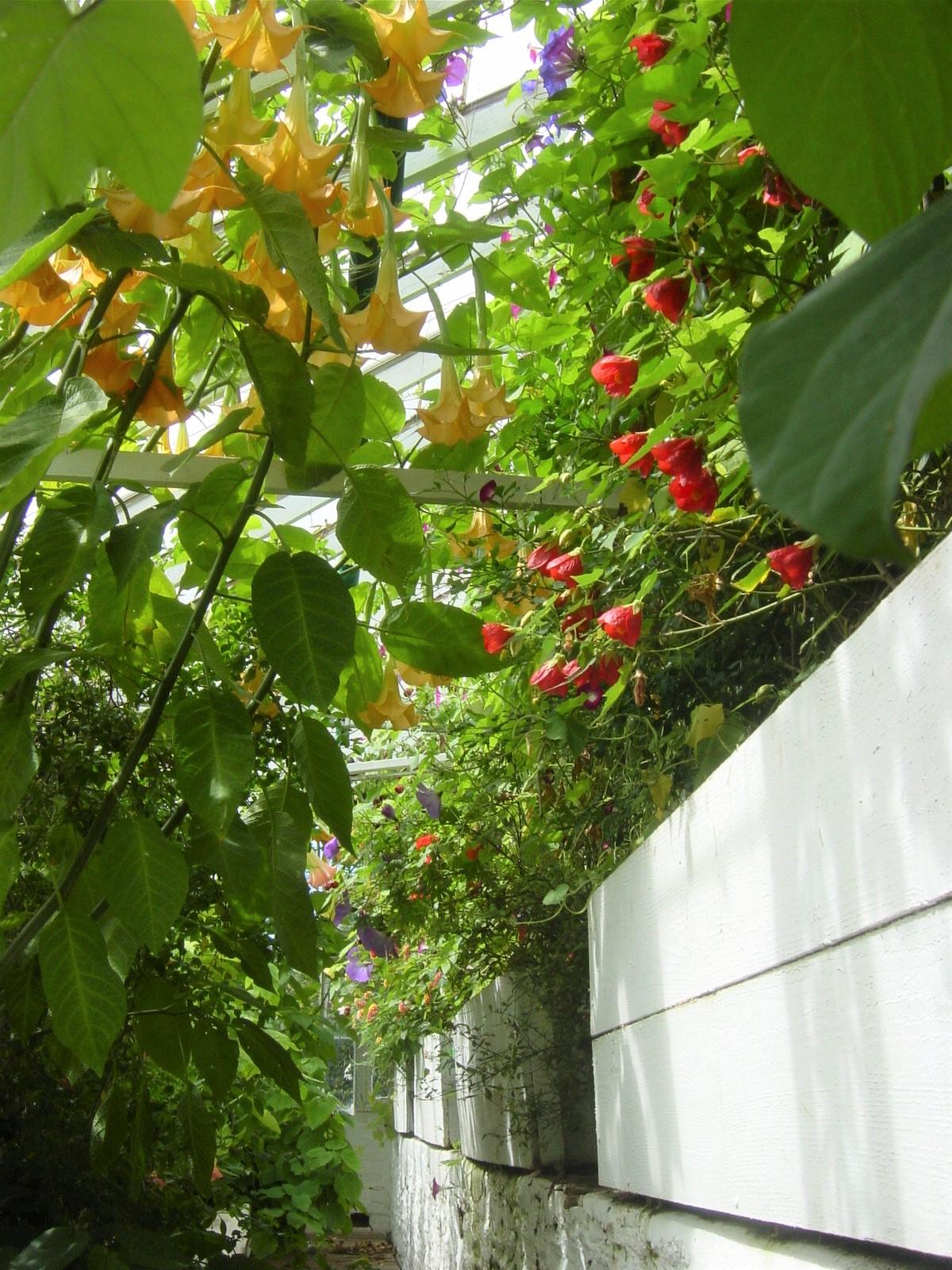 The Greenhouse St Brannocks Gardens